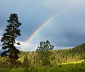 picture of gaul  - Rainbow in mountains - JPG