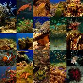 pic of coral reefs  - A collection of 25 photos of sea life in The Philippines and Malaysia - JPG