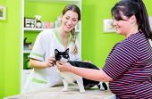 Cat and its owner at veterinarian or pet parlour poster