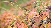 Field. Video. Flower Field. Cosmos Flower In A Field. Field Plants poster