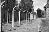picture of auschwitz  - Fence and observation tower at Auschwitz Birkenau concentration camp in Poland - JPG