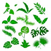 Tropical Leaves Vector Set Isolated On White Background. Different Green Leaf Collection. Jungle For poster