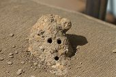 Close Up Of A Mud Dauber Wasp Nest Made By A Solitary Wasp Out Of Mud With Entry And Exit Holes poster