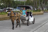 Girl In Hat On Coach With Brown Horse. Tourist Attraction On Street. Vintage Coach With Horse. Cute  poster