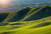 The Sun Shine The Alpine Meadows Brightly With Cattle Grazing On Pasture Field In The Wriggle Of The poster