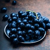 Bunches Of Fresh Ripe Blue Grapes On A Metal Tray Textural Table Background. Dark Grapes, Blue Grape poster
