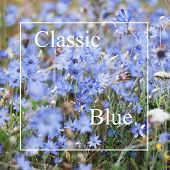 Wild Blue Flowers In Trend Color, Classic Blue. Blue Flowers Close Up, Natural Background For New Tr poster