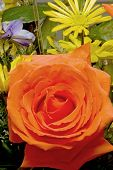 image of get well soon  - An assortment of fresh and colorful cut roses - JPG