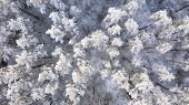 Aerial View Of A Winter Snow-covered Pine Forest. Winter Forest Texture. Aerial View. Aerial Drone V poster
