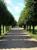 Lime Avenue In Ancient Manor Sheremetev Kuskovo'S Column poster