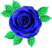 Vector Bright Blue Rose Flower. Rose Clipart With Petals And Leaf. Transparent Background. Close Up. poster
