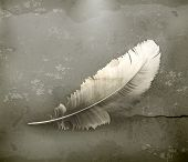 Feather, old-style vector
