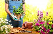 stock photo of spade  - Gardener  holding a pot with plant in garden - JPG