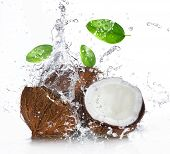 stock photo of coco  - cracked coconut with splashing water - JPG