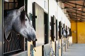 image of horse face  - Head of beautiful horses that are in the stables - JPG