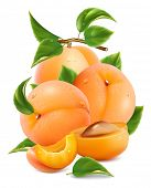 picture of apricot  - Vector illustration - JPG