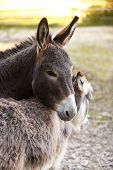image of deer family  - Portrait of a donkey family in the deer park - JPG