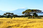 stock photo of kilimanjaro  - Snow on top of Mount Kilimanjaro in Amboseli