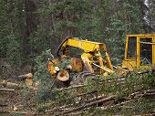 stock photo of skidder  - Skidding logs in the forest - JPG