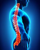 stock photo of spine  - Human Male Spine Anatomy Illustration - JPG