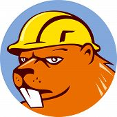 stock photo of aquatic animal  - Illustration of a beaver construction worker wearing hard hat set inside circle on isolated background done in cartoon style - JPG