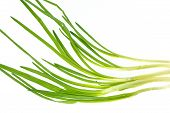 image of green onion  - bunch of fresh green onions bunch of fresh green onions - JPG