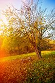 stock photo of wagon wheel  - wagon wheel in the countryside orange daylight - JPG