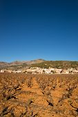 picture of costa blanca  - Vineyards under Mediterranean sunshine in inland Costa Blanca Spain - JPG