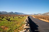 pic of costa blanca  - Vineyards under Mediterranean sunshine in inland Costa Blanca Spain - JPG