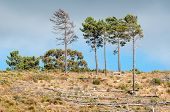 pic of south-western  - Wooden bench next to pine trees near Sir Lowrys Pass in the Western Cape Province of South Africa - JPG