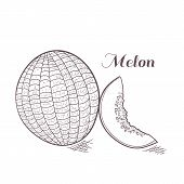 foto of muskmelon  - Engaved monochrome melon with slice vector illustration - JPG