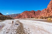 picture of colt  - A young colt in a valley surrounded by beautiful red hills in Tupiza Bolivia - JPG
