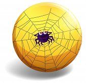 pic of spider web  - Cute spider making spider web - JPG