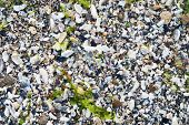 stock photo of algae  - background from pieces of shells and algae - JPG
