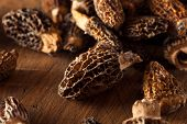 foto of morel mushroom  - Raw Organic Morel Mushrooms Ready to Cook - JPG