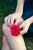 stock photo of lap  - Woman sitting on the grass and holding a red rose flower on her lap - JPG