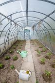 stock photo of early spring  - the arch of the greenhouse tomato seedlings in early spring - JPG