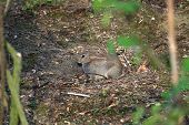 pic of hollow  - Baby wild Rabbit basking in evening sun in hollow in ground - JPG