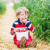 Постер, плакат: Cute Little Boy In Glasses Picking And Eating Strawberries On Berry Farm