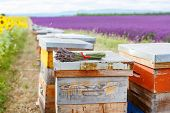 stock photo of honey bee hive  - Bee hives on lavender fields near Valensole Provence - JPG
