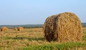 picture of hay bale  - dry hay bale on green meadow - JPG
