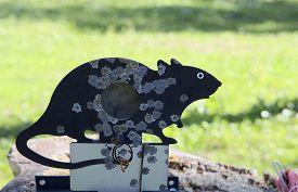 pic of rats  - Metal rat figure target for shooting practice - JPG