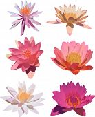 picture of six-petaled  - illustration with six lily flowers isolated on white background - JPG