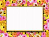 Summer Flowers Frame poster