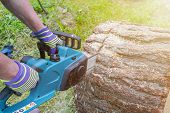 Chainsaw. Chainsaw In Move Cutting Wood. Man Cutting Wood With Saw. Dust And Movements. Close-up Of  poster