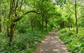 Footpath Through Typical British Deciduous Woiodland In Summer poster