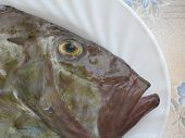 foto of faber  - Head detail of fresh trapped fish San Pierre  - JPG