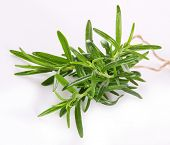 Fresh rosemary on white background