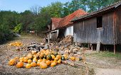 foto of penticton  - Pumpkins in a village courtyard - JPG