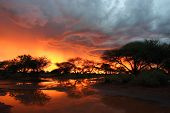 Kalahari Thunderstorm At Sunset With Camelthorn Trees
